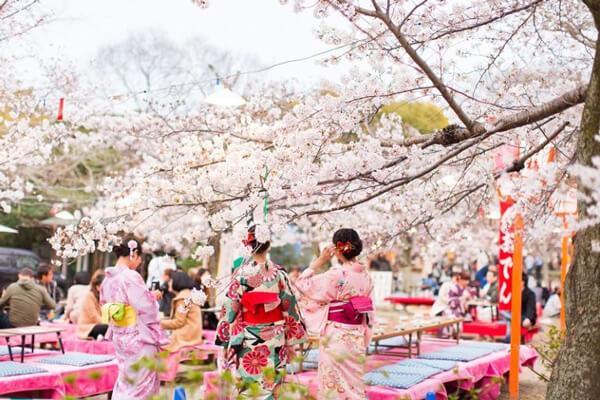 Hanami là gì? Các văn hóa trong lễ hội Hanami